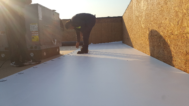 Laying rolls for the new roof.